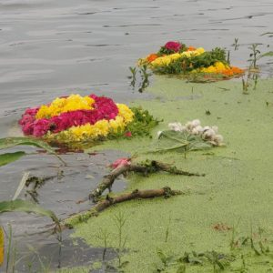 Temple flowers cause water pollution