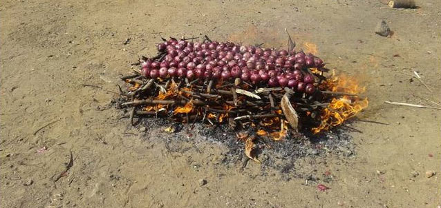 Onions being roasted in on bamboo to make yesur mix