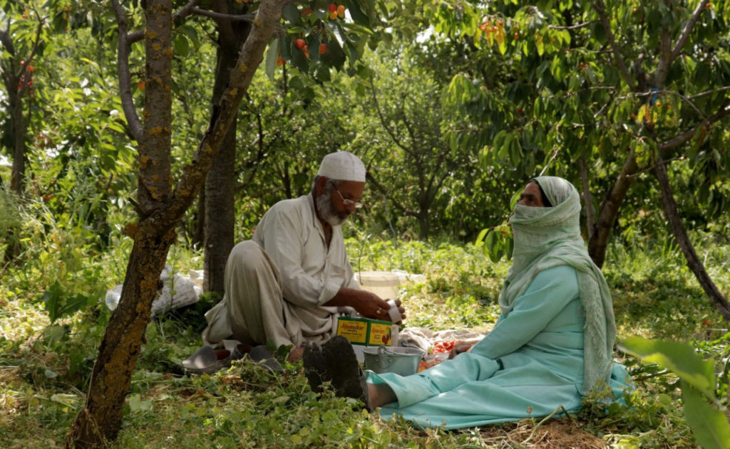 COVID-19 impact: Fruit growers stare at losses as strawberries, cherries & apples rot in Kashmir, 30 Stades, srinagar,