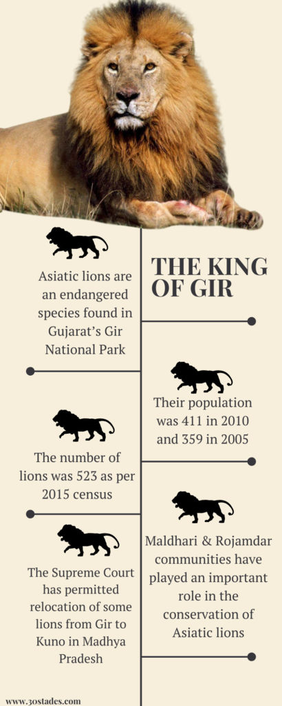 How Maldharis & Rojamdars of Gir are helping in the conservation of endangered Asiatic lion, 30 Stades, Gujarat