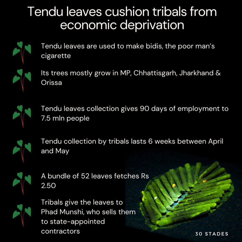 Tendu leaves cushion tribals from economic deprivation during COVID-19, bidi, poor man's cigarette, 30stades, tribal population, sustainable living, india, mp, odisha, chhatisgarh, jharkhand, statistics, infographic