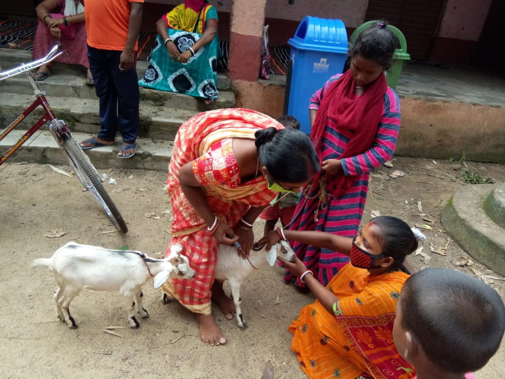 In shortage of vets, pashu sakhis support cattle & poultry farmers in Jharkhand's badlands, WORLD BANK, PROJECT JOHAR, FAO, ASIAN BEST PRACTICES, LIVELIHOOD IN MAOIST LAND, 30 STADES