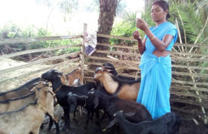 In shortage of vets, pashu sakhis support cattle & poultry farmers in Jharkhand's badlands, world bank, FAO, Project Johar, Poultry, livelihood in Maoist areas, 30 Stades