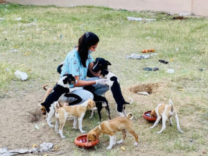 In pictures: hands that feed stray animals during COVID-19 lockdown dogs cats crows cow horses raksha jaipur, heartily claws 30 stades