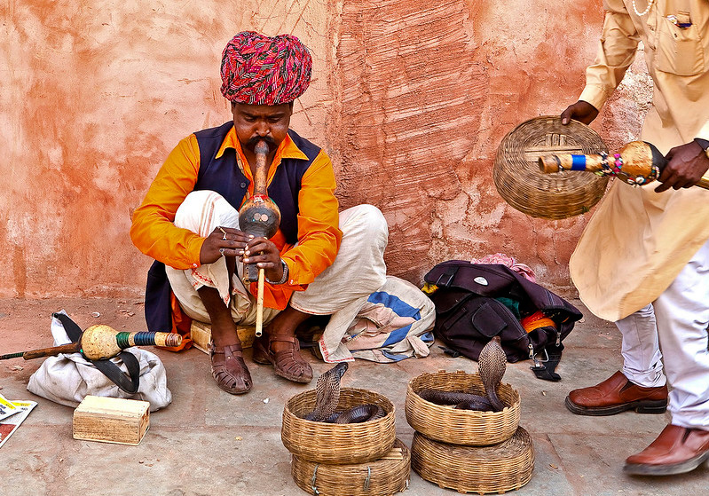 Snaker charmers of Rajasthan belong to the Kalbelia tribal community. They use