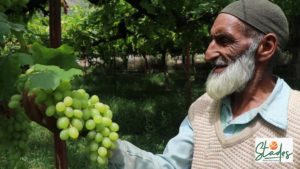 Repora: The Kashmir village that produces grapes of international quality ready in August with Italy, off season in INdia, Jammu and Kashmir, fruits red grapes
