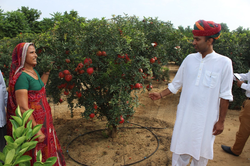 How organic fruit farming made Rajasthan's Santosh Devi a millionaire shekhawati krishi farm rajasthan organic pomegranates lemon mosambi ber organic manure sustainable agriculture ecofriendly 30 stades