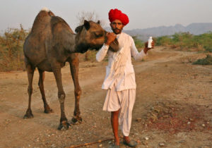 Camel Charisma takes camel milk and cheese across India