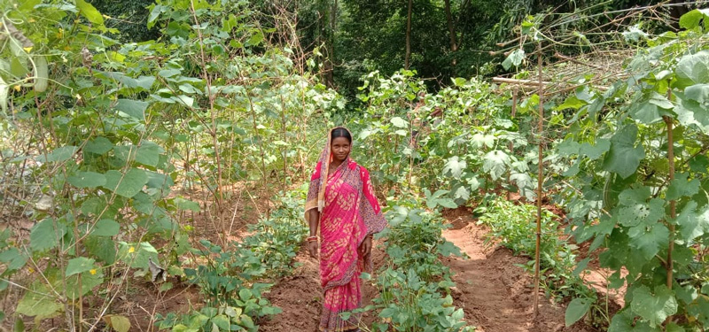 Odisha women fight malnutrition through organic nutrition gardens MGNREGA malnutrition programme of Odisha Government 30 stades