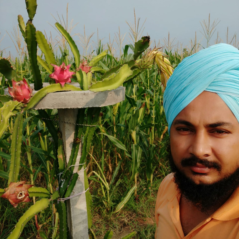 Organic farming of dragon fruit and lemon triples Punjab farmer's income