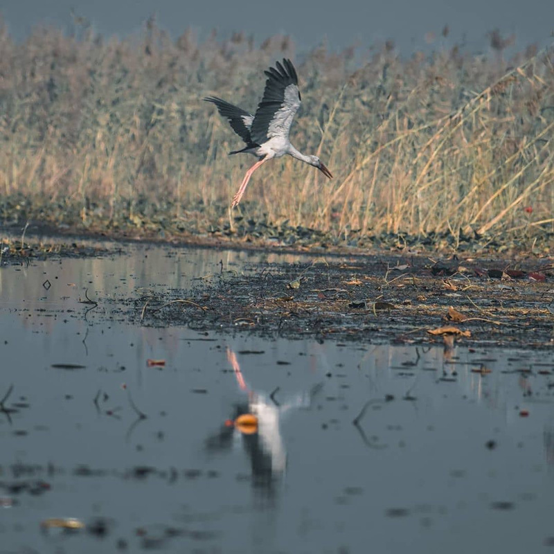 The species of birds, including migratory birds which visited the Kanwar Lake, has gone down.
