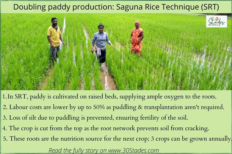 Doubling paddy production : Suguna Rice Techique(SRT)