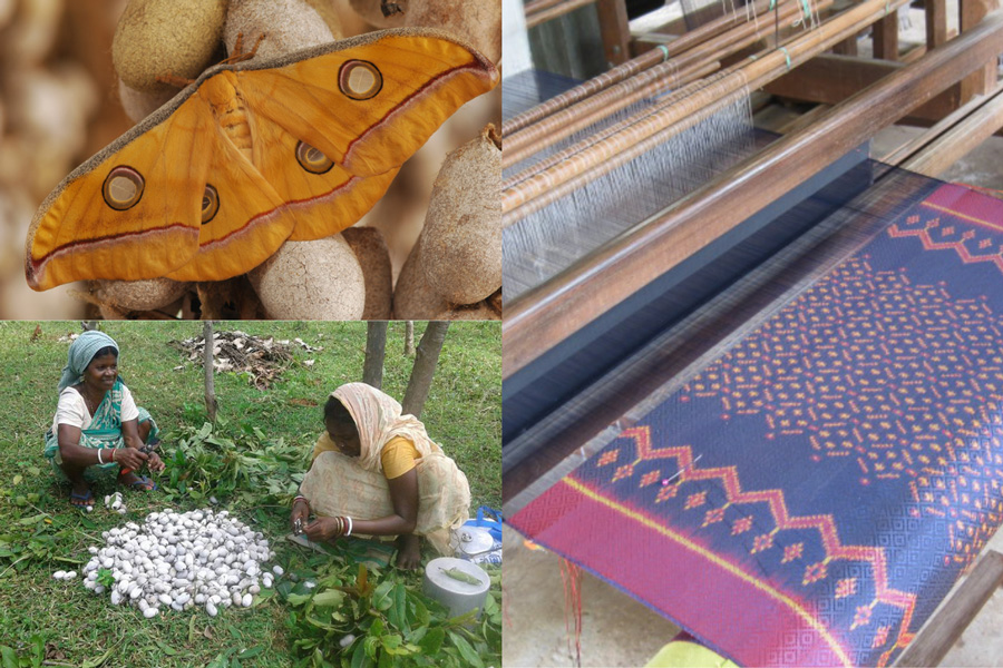 Tribal women entrepreneurs double incomes with Tasar silk farming mulberry eri muga india silk from silkworm from eggs to larvae silkworm cocoon and thread 30 stades