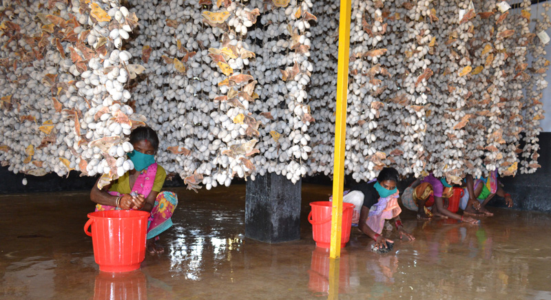 Grainage, where parental seed cocoons are reared, has to be kept clean. Its temperature and humidity are regularly monitored. Pic: through Pradan