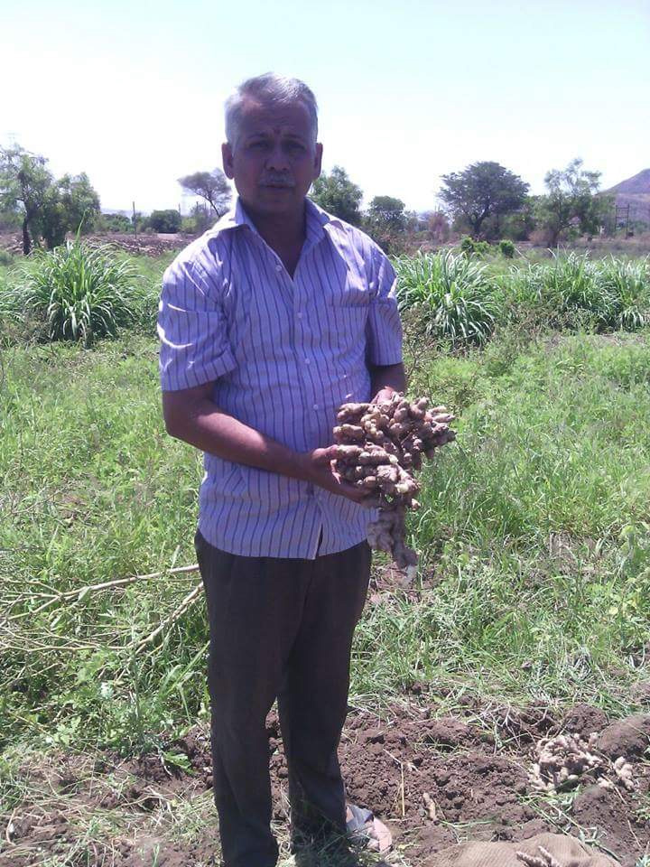 Chivate holds the record for growing a single ginger rhizome weighing 7 kg. Pic: through Sudeep Chivate