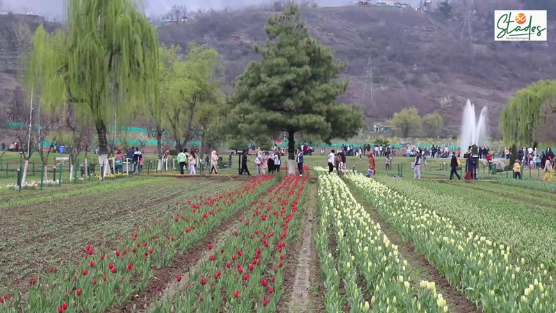 Built on a sloping ground, the Tulip garden has seven terraces. Pic: Wasim Nabi 30 stades
