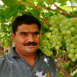 Residue-free farming: How Nashik's millionaire grape farmer uses technology to get a yield of 10 tonnes per acre 30 stades