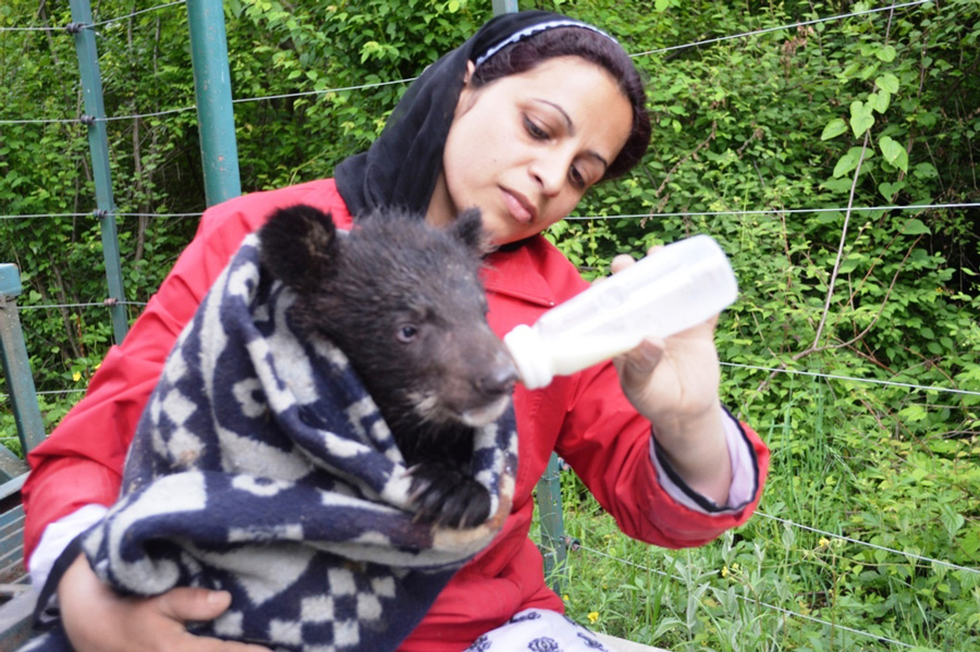 Wildlife SOS Project Manager Aaliya Mir feeding milk to a bear cub separated from his mother. Pic: courtesy Aaliya Mir