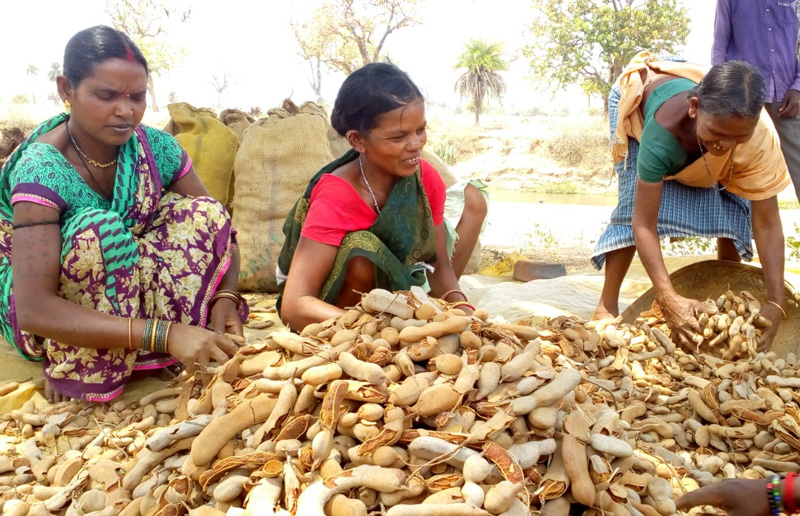 Tribal women with forest produce which is sold through the Farmers Producer Organisation. Pic: through Nirmaan