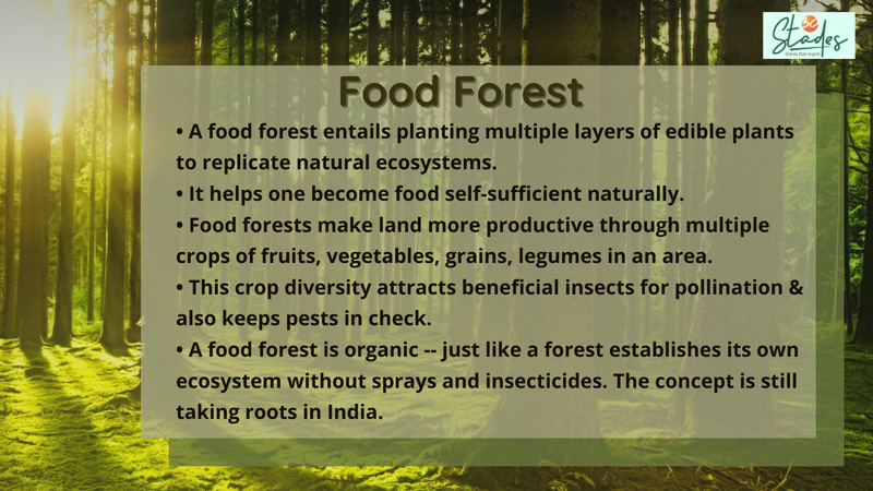 What is food forest? How is food forest grown in India. 30 stades