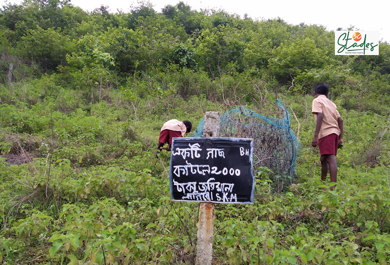 A board mentioning a fine of Rs2,000 for anyone who cuts the trees. Pic: Partho Burman 30stades