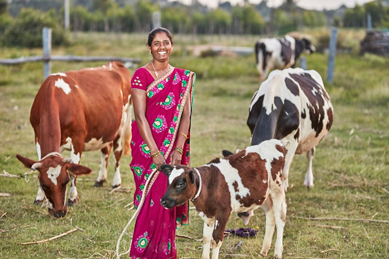 Sreeja Mahila Milk Producer Company has empowered women in four drought-prone districts of Andhra Pradesh. Pic: Shreeja MMPCL  30 STADES