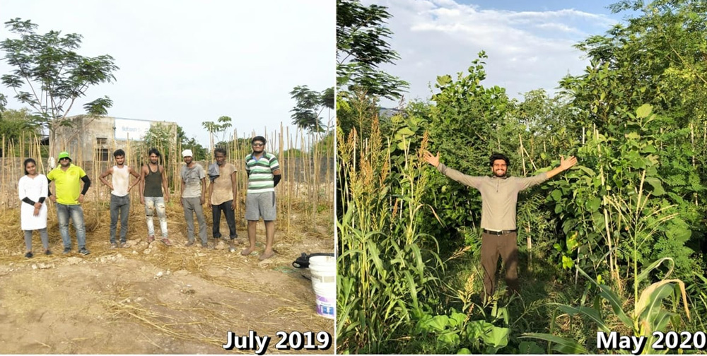 Udaipur youths turn barren lands green, help 1200 farmers go back to traditional farming