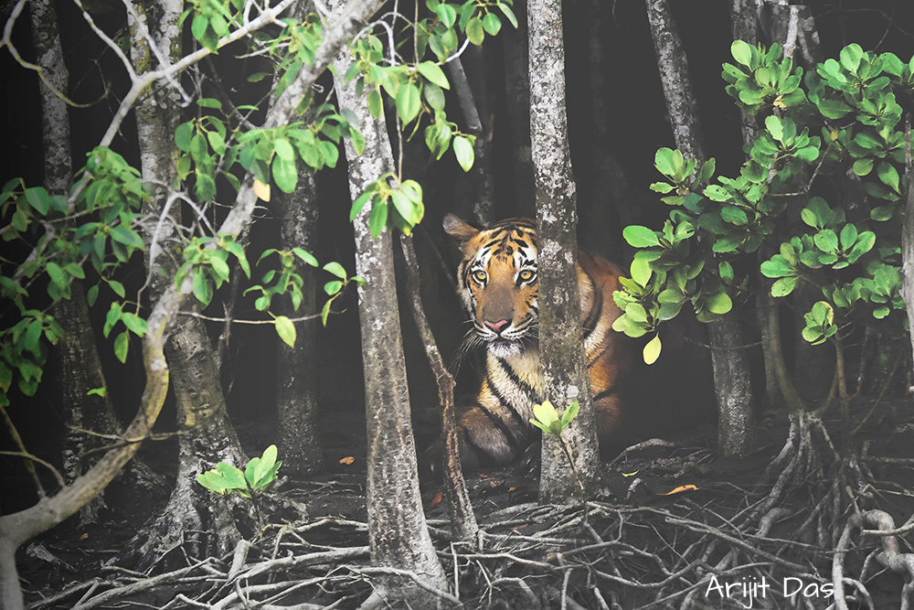 Man-animal conflict: Men who survived tiger attacks in Sundarbans share their stories livelihood socio-economic conditions mangrove forests 30 stades