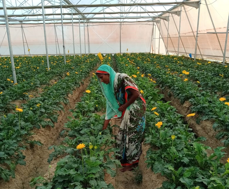 Kusum Devi works at the polyhouse and also gets the time to look after her own small farm. Pic: courtesy Abhinav Singh