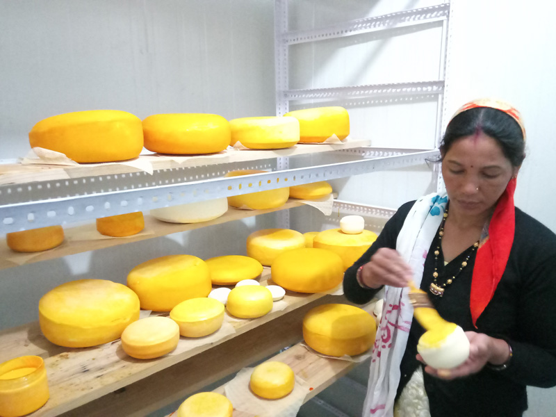 Cheesemaking has financially empowered women. They are also able to run independently run operations at the unit where tonnes of cheese is in the cold storage for ageing. Pic: Old Hill Foods