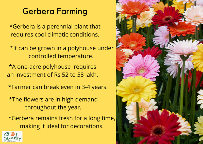 Gerbera cultivation farming in India information infographic 30stades