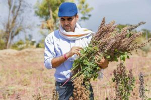 Rapid Organic: Rajasthan farmer's venture helps 12,000 organic growers find global market organic spices organic cereals millets oil 30stades